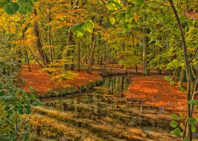 15 Autumn Water_Levels-Roger Leck