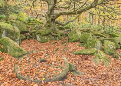16 Millstone Under The Beech Tree-Steve Bexon