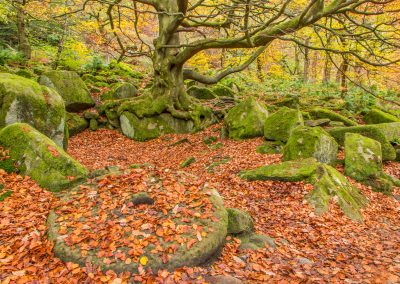 16 Millstone under the Beech Tree_More Sat - Steve Bexon