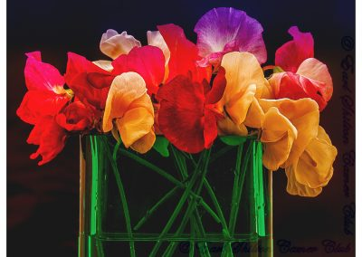 19 Sweet Peas-Peter Lawrance