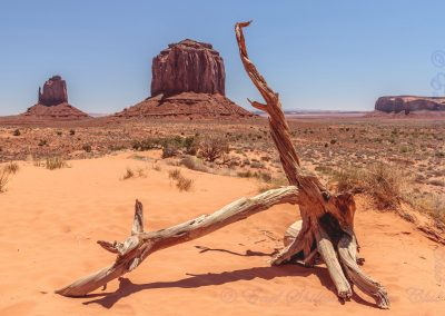 Dead Juniper Tree & Buttes In Monument Valley-Steve Bexon