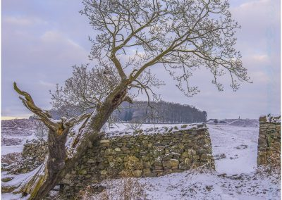 20 Bradgate In The Snow-James Botterill