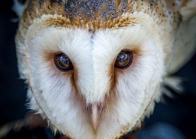 04 (6) Barn Owl - Rob Jones - Scored 21.3