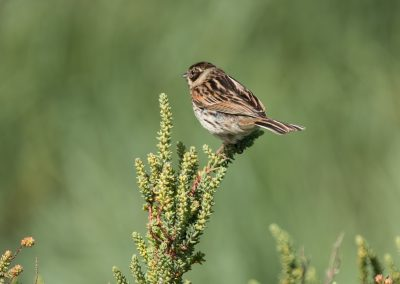 41 (46) Reed Bunting - Graham Townsend - Scored 17.86