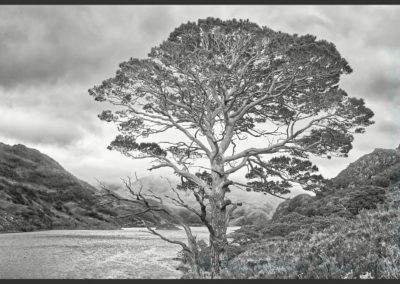 19 Scots Pine At Loch Hourn-Steve Pears 20.79