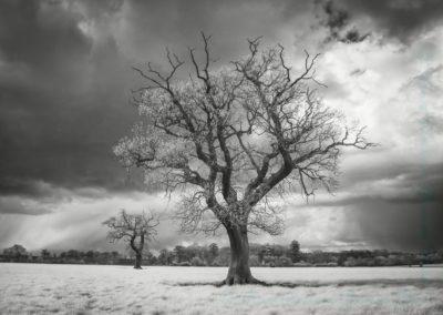 Forlorn-Paul Steans