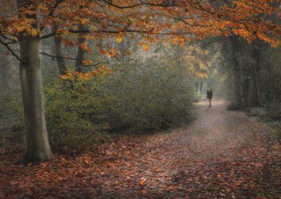 Woodland Walk-James Botterill