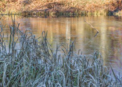 Cold Day At Calke-Steve Bexon