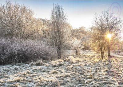 Evening On The Common-Ian Waite