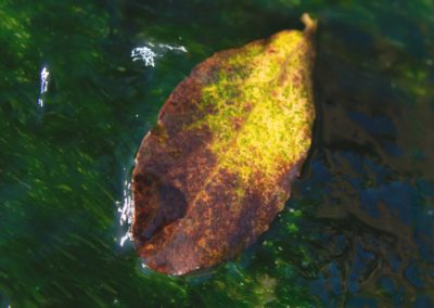 Floating Leaf-Al Simms