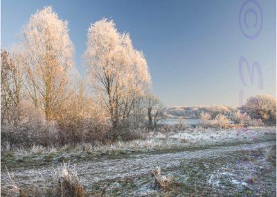 Frosty Common-Ian Waite
