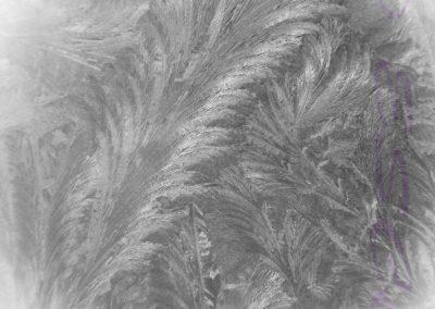 Frozen Ferns-Paul Steans
