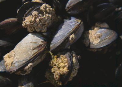 Mussels-Al Simms