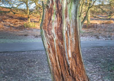 Rot At Bradgate-Rob Jones