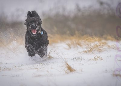 Snow Chase-James Botterill
