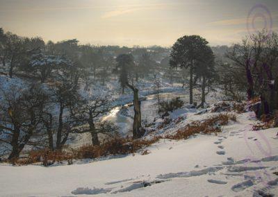 Snowy Bradgate-John Denny