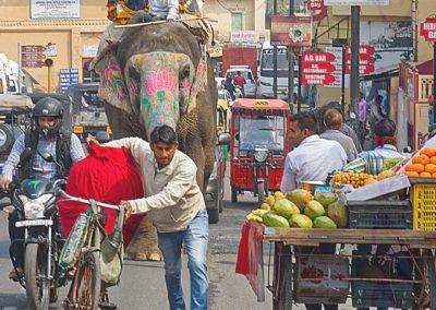 Elephant Approaching-Steve Pears