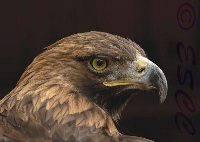 Eagle-Chantal Cooper