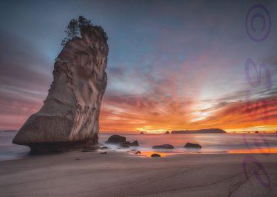 Te Hoho Rock-Phil Mallin