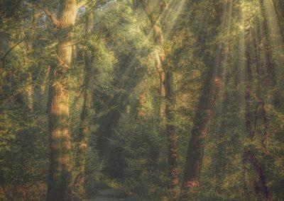 Woodland-James Botterill